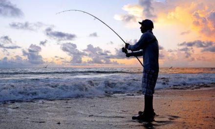 BlacktipH – Fishing for Mullet Run Predators from Shore and Battling Seaweed