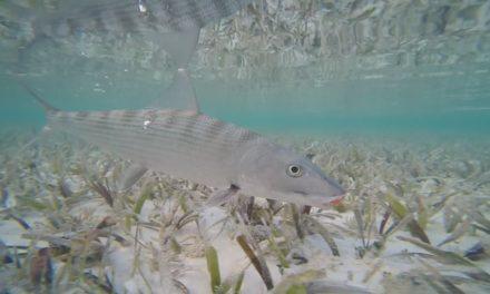 Dan Decible – Fly fishing in Cuba