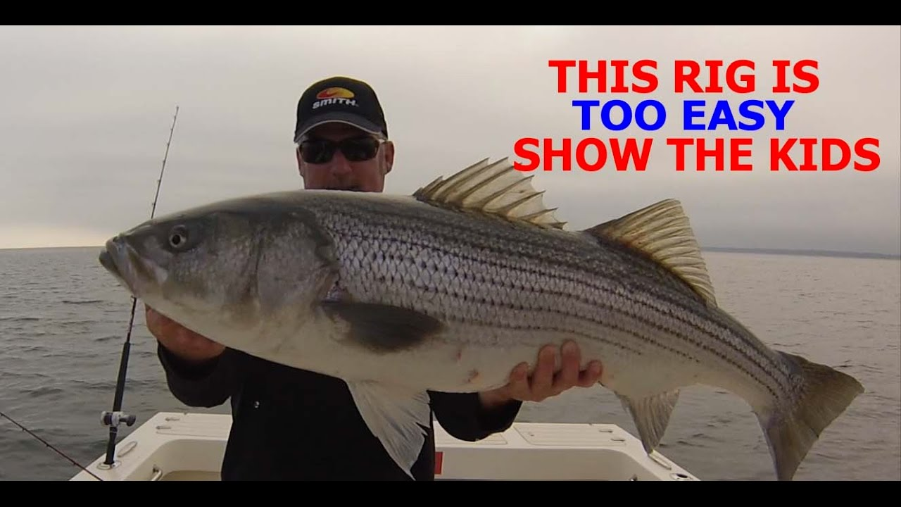 how to catch stripped bass