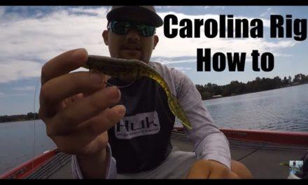Lake Fork Bass Fishing Tips: Carolina Rig How To