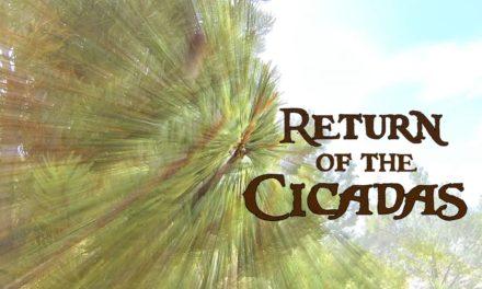 Dan Decible – Return of the Cicadas – Green River Fly Fishing