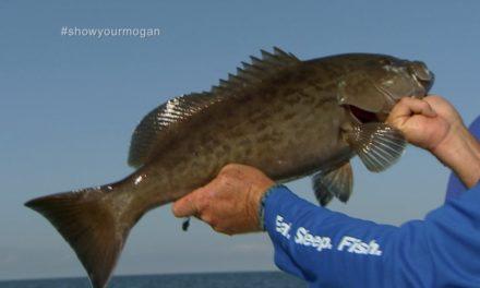 Shallow Water Grouper Fishing in Homosassa Florida