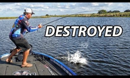Big Bass Crushes Swimbait – Most in-depth how to video on swimbaits for bass fishing