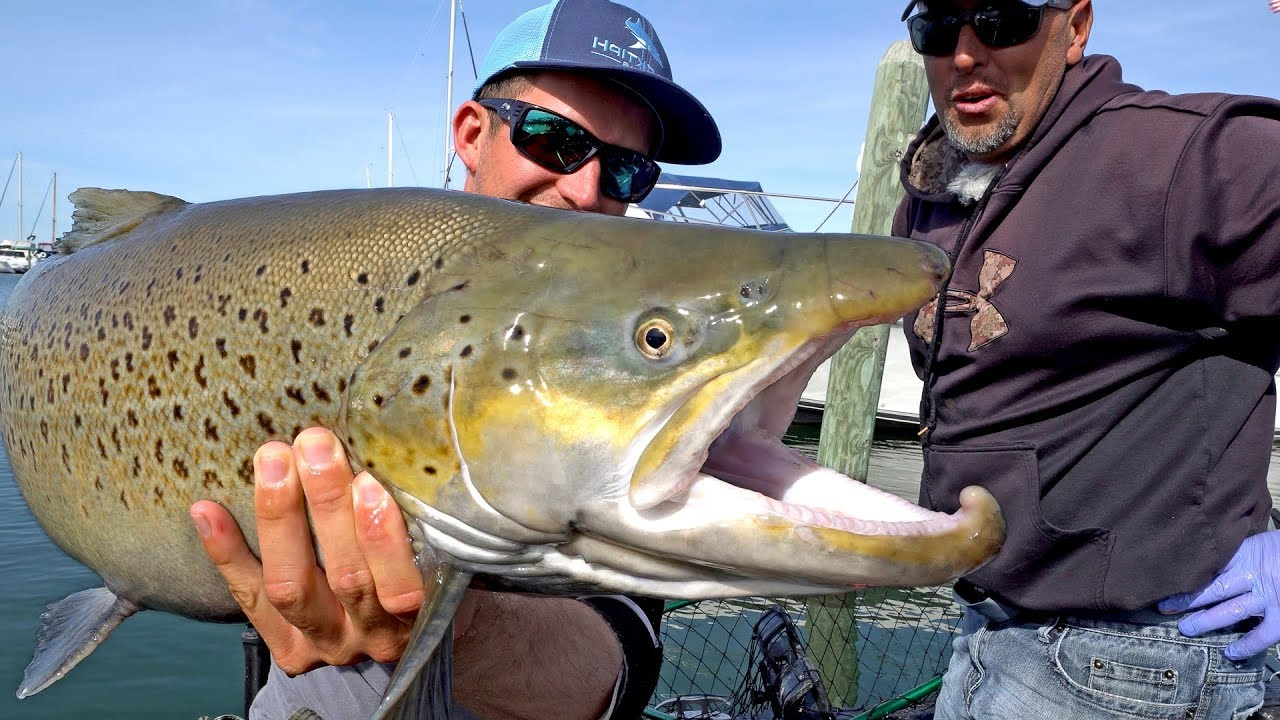 BlacktipH - Fishing for Monster Brown Trout by Downton ...