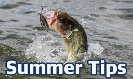 Scott Martin Pro Tips – How to catch bass in the summer – In-depth fishing advice and lure choices