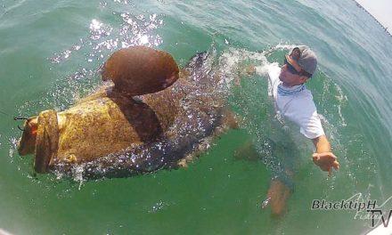 BlacktipH – Huge Florida Keys Grouper!