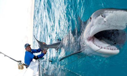 BlacktipH – Massive 1000lb Tiger Shark caught while Bottom Fishing in the Bahamas – 4K