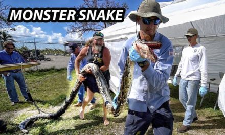 Scott Martin VLOG – Record Giant Python in Florida – Python Hunters!