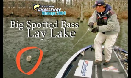 Big Spotted Bass on Lay Lake – TBT
