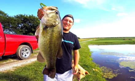 Flair – Catching GIANT Bass on Topwater Frogs!!!