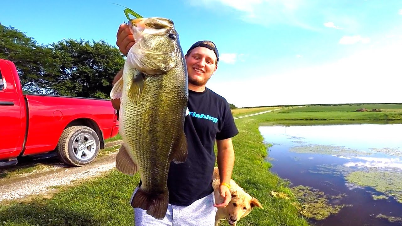 Flair catching giant bass on topwater frogs angler hq for Flair fishing rod