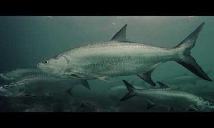 Silver Kings Season 4 | Trailer