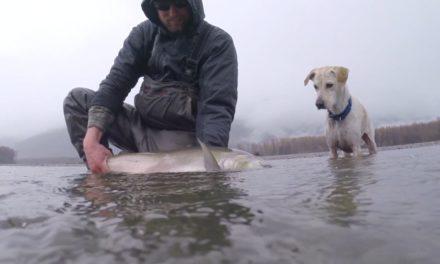 Dan Decible – Way of The Fish | Chromer Sport Fishing