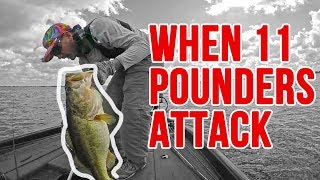When 11 Pound Bass Attack Out Fishing! Insanely Huge Fish