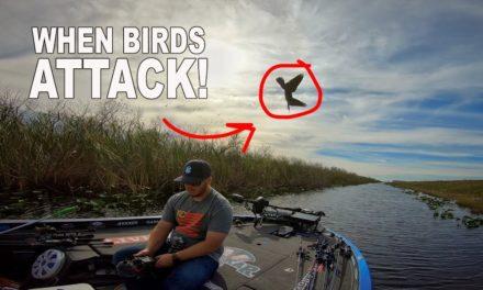 Scott Martin – When Birds ATTACK!