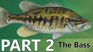 Beginner's Guide to BASS FISHING – Part 2 – The Bass