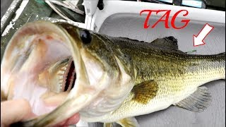 Caught a Rare Tagged Bass!