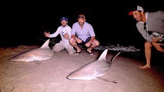 BlacktipH – NY Mets Insane Night of Beach Shark Fishing – 4K