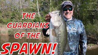Chesapeake Bay Spring Bass Fishing Trip with Epic Eric!