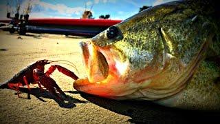 LIVE Crawfish Bass Fishing Challenge!!