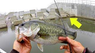 New HIDDEN Fishing Spot is LOADED w/ Spring Bass!!