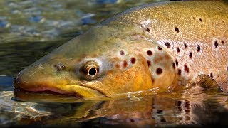Pure New Zealand Part 2 – Trout Fishing by Todd Moen