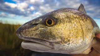 Salt Strong | – The Best Lures For Catching Redfish [Surprise Answer]