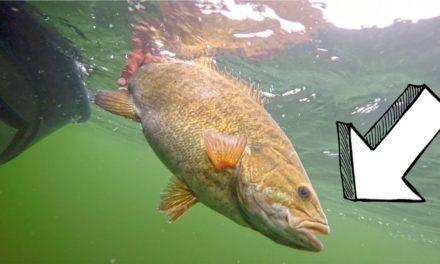 BASS fishing LOADED LAKE Huron w / My SECRET Lure