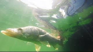 Chokoloskee Fishing for Snook Red Grouper and Mangrove Snapper