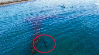 Lawson Lindsey – Extremely RARE GIANT 15 Foot FISH Swims Right up to Small Boat