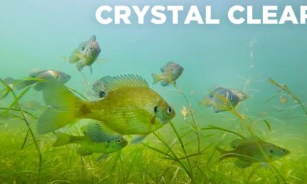Lunkers TV – Fishing Crystal Clear Water – 4 of 10,000 lakes