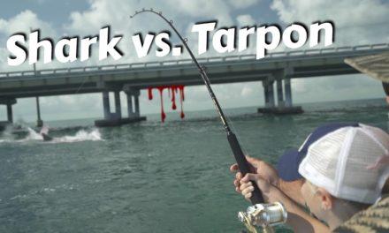 Scott Martin – Hilary Battles a Big Fish then Something Very Bad Happens…TAXMAN!
