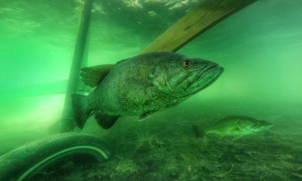How to Catch Bass Around Docks with Wacky Rigs