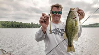 Basics in Shaky Head Fishing Summer Bass in 2018