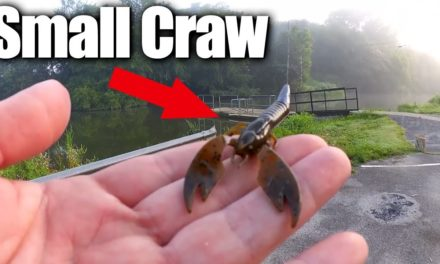 Bass Fishing a Small Craw Texas Rig + EPIC Fishing Mail Unboxing