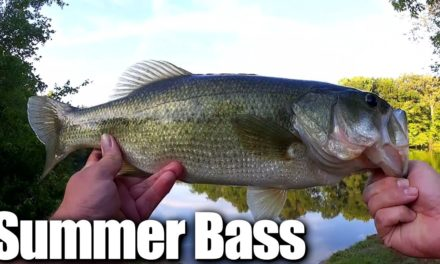 Catching Big Bass on Poppers – Cheap Fishing Lures VS. Name Brand