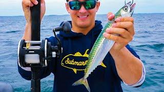 Lawson Lindsey – Catching Monster Fish on Huge Live Mackerel