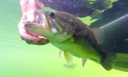Flair – Clear Water Summer Bass Fishing – VLOG