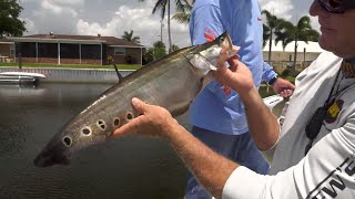Clown Knife Fish and Big Largemouth Bass in South Florida Canals