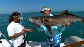 Cobia Fishing the Manta Rays off of Cocoa Beach Florida