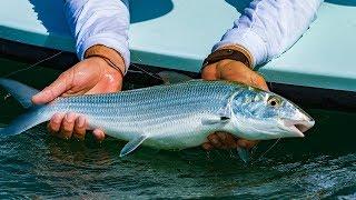 Fly Fishing for Bonefish Chub Cay Resort and Marina Bahamas – 4K