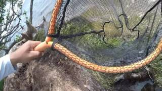 Salt Strong | – How To Catch And Rig Fiddler Crabs For Catching Redfish, Black Drum, & Sheepshead