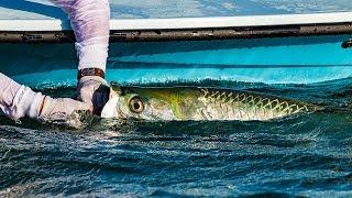 Tarpon Fishing Florida Everglades National Park – 4K