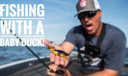 Scott Martin Pro Tips – Baby Duck Lure Catches Them!