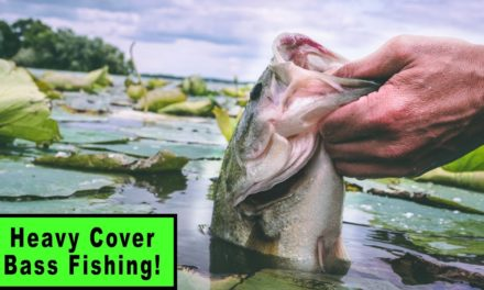 HEAVY COVER Fishing For BIG Wisconsin Bass (Late Summer Fishing Tips)