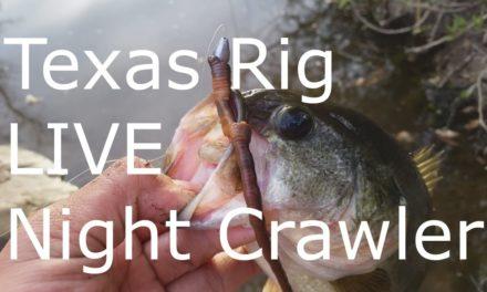 Texas Rig Live Night Crawlers – Bass Fishing