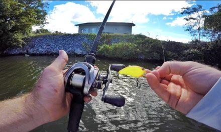20 Min. UNCUT River Bass Fishing!
