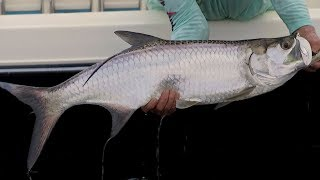 Inshore Fishing for Snook and Tarpon with Mark Nichols DOA