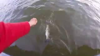 BASS FISHING ON TELLICO LAKE