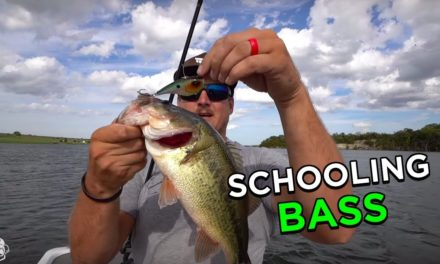 How To Catch Schooling Bass with Ben Milliken!